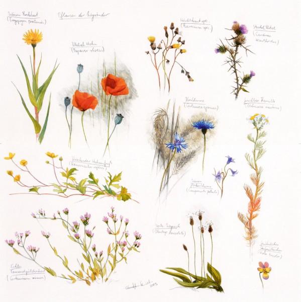 Pflanzen der Wegränder
