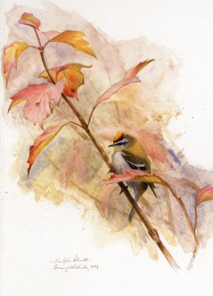 Sommergoldhähnchen